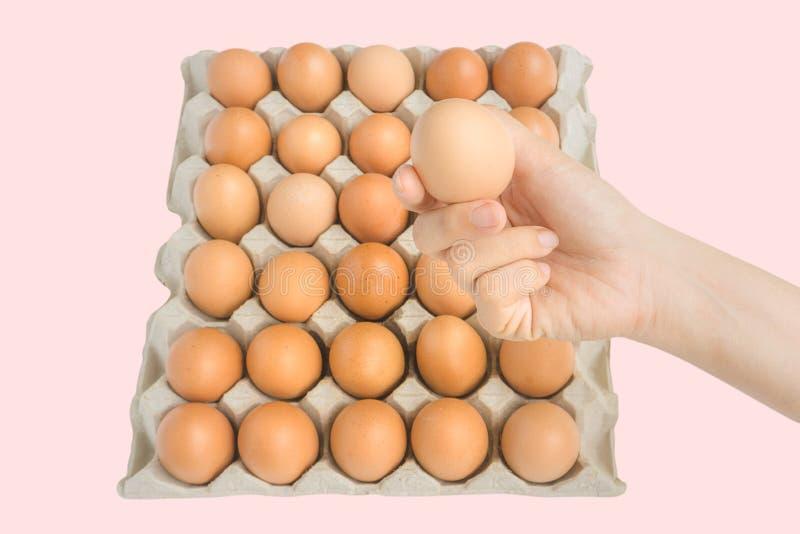 La main en gros plan de jeune femme tiennent un oeuf brun frais et cru de poulet, boîte à oeufs en tant que beau fond eggs organi images libres de droits
