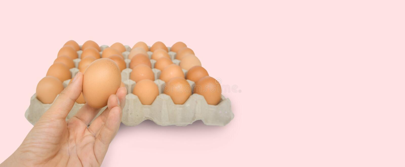 La main en gros plan de jeune femme tiennent un oeuf brun frais et cru de poulet, bo?te ? oeufs en tant que beau fond eggs organi photos stock