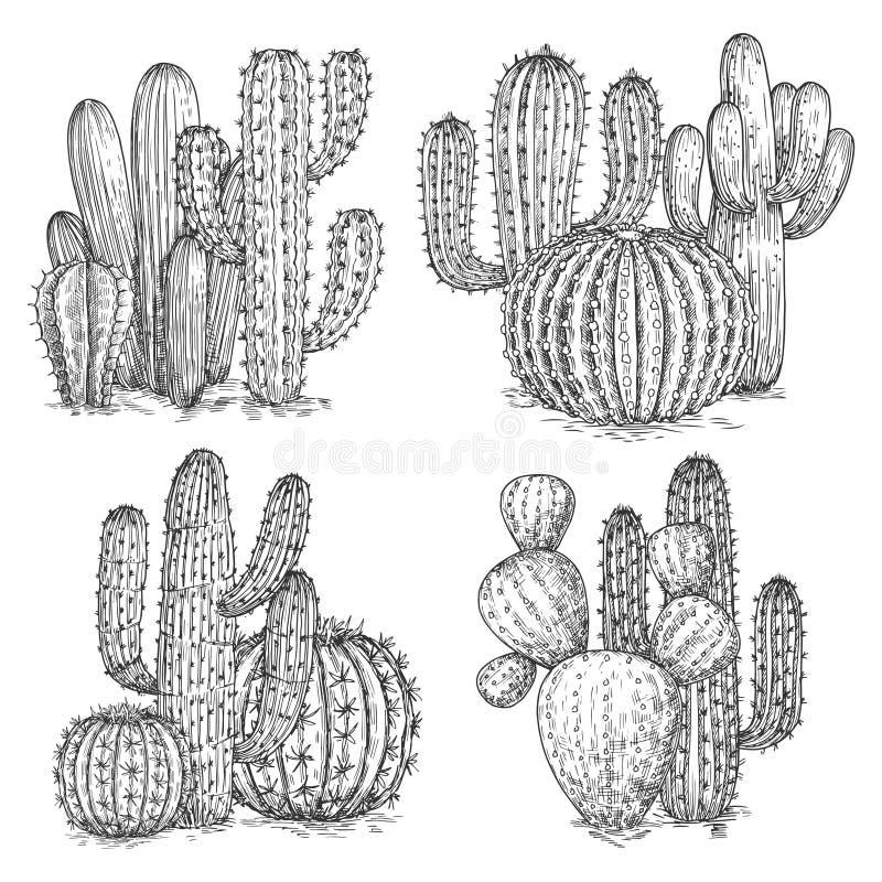 La main a esquissé l'illustration de vecteur de cactus Compositions en fleurs de désert d'isolement sur le fond blanc illustration stock