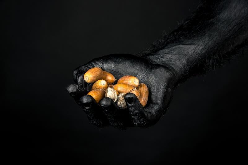 La main est complètement en peinture noire tenant une poignée de glands image stock