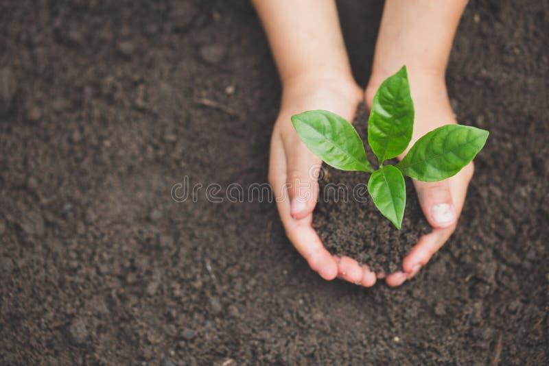 La main humaine tenant une petite jeune plante, usine un arbre, réduisent le réchauffement global, jour d'environnement du monde photos libres de droits