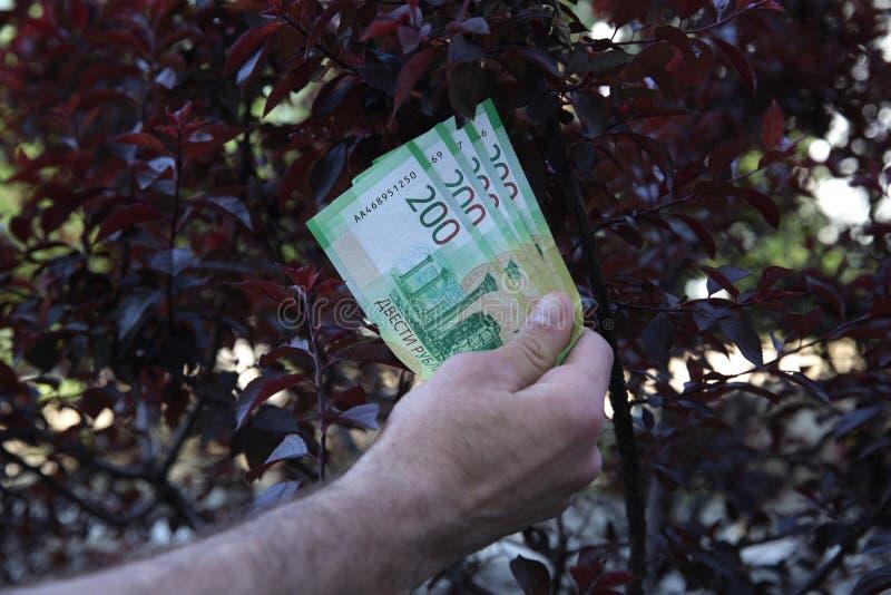 La main masculine tient de nouveaux billets de banque russes deux cents roubles sur l'arbre rouge de fond photo stock