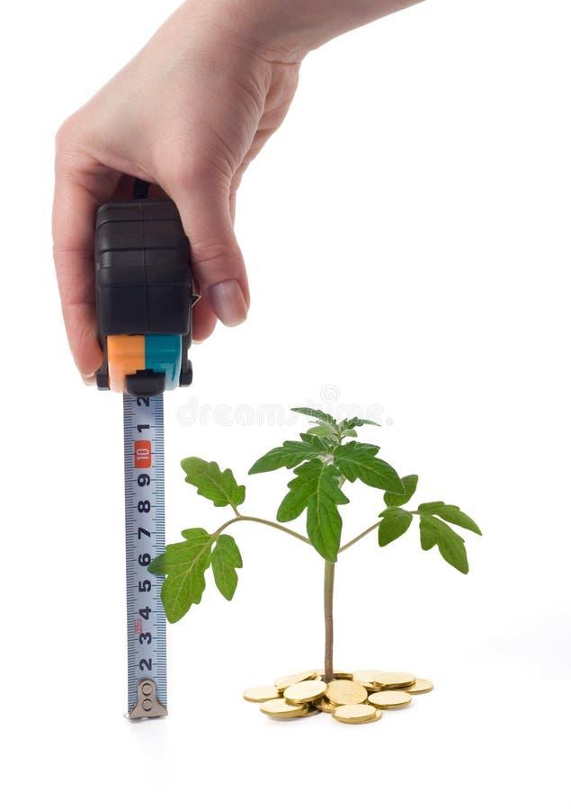 La main mesure la croissance de plantes photographie stock libre de droits