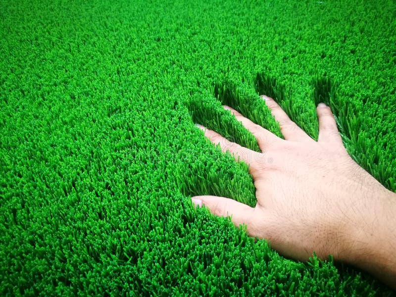 La main a placé sur l'herbe artificielle verte image stock