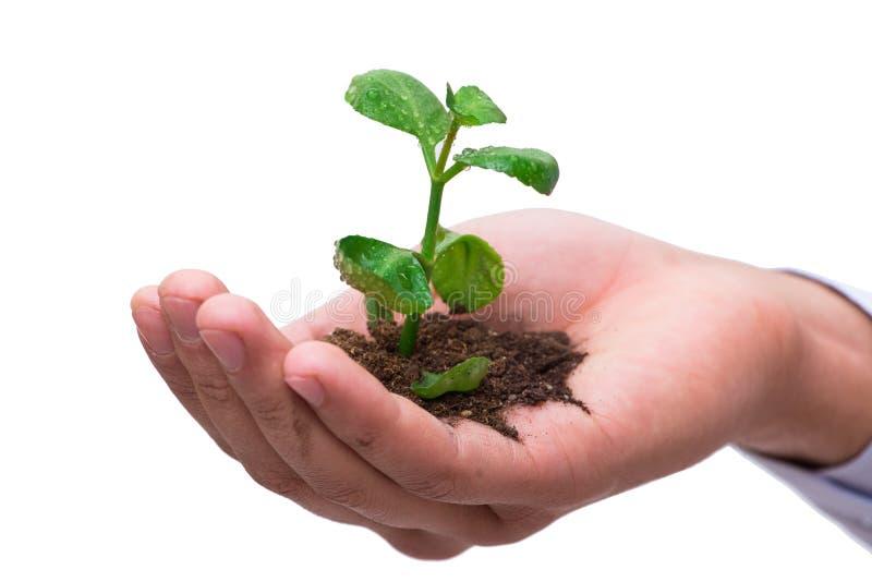 La main tenant la jeune plante dans le nouveau concept de la vie sur le blanc photos stock