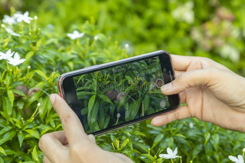 La main a utilisé la vidéo ou la longueur recoed par smartphone photographie stock