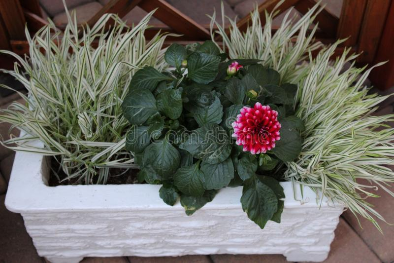 La maison a fait le pot de fleurs avec des usines photos stock