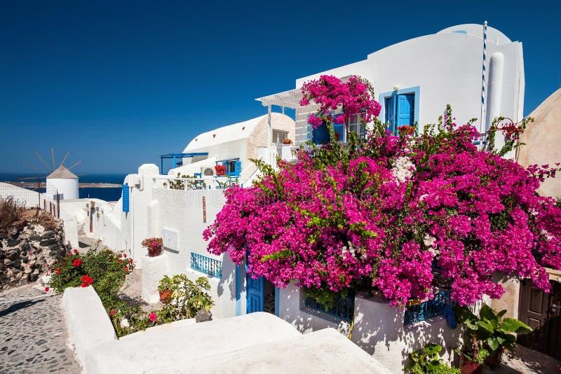 La maison grecque traditionnelle avec une grande bouganvillée fleurit images stock