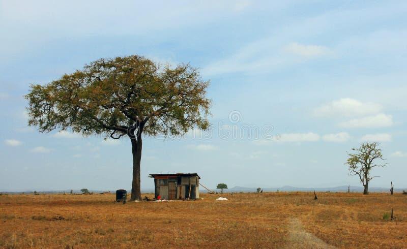 La maison sous un arbre photographie stock