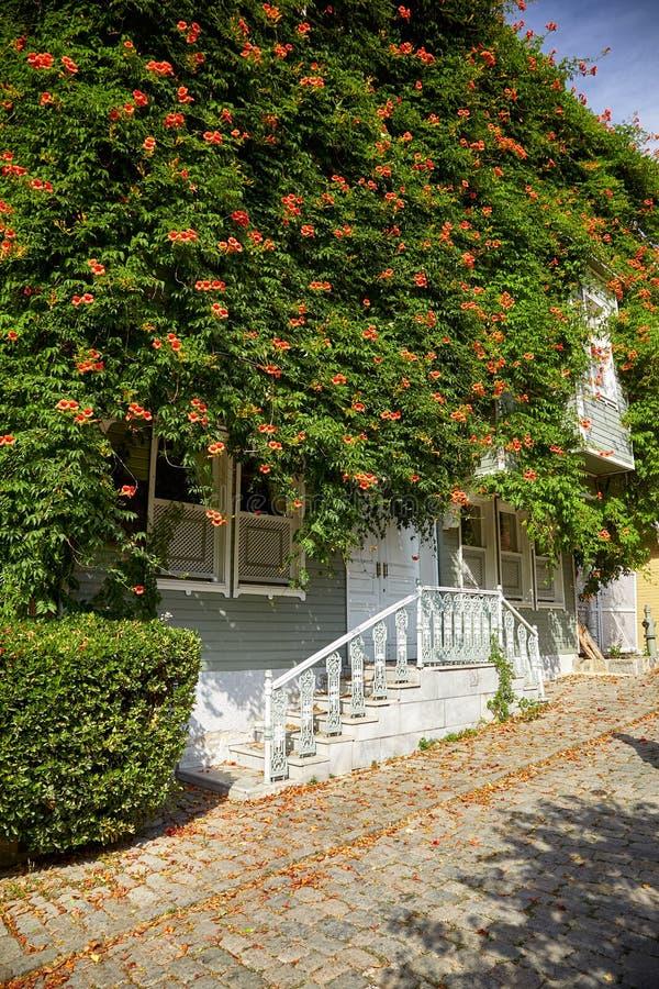 La maison a tressé avec la plante grimpante de Campsis sur la rue de la fontaine froide images libres de droits