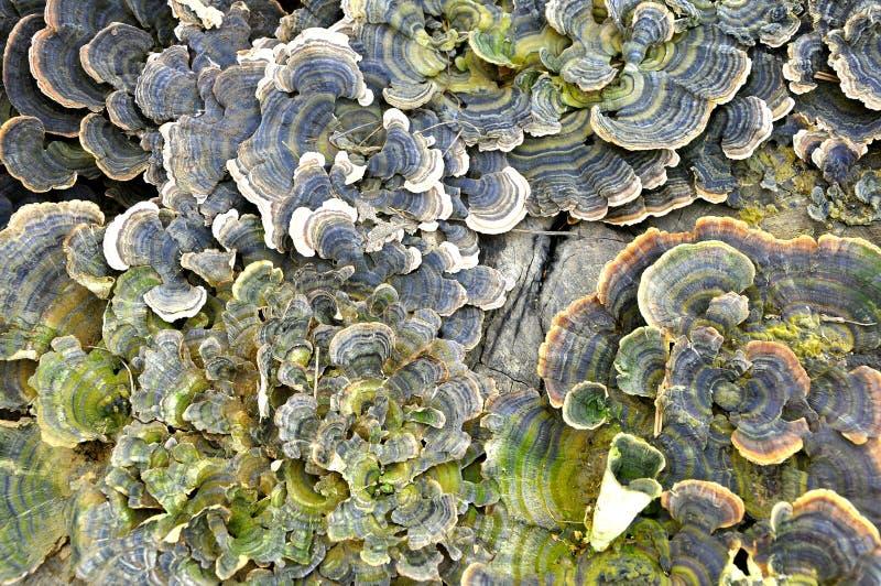 La maladie d 39 corce d 39 arbre avec le myc te photo stock image du environnement fond 18444636 - Maladie des arbres fruitiers ...