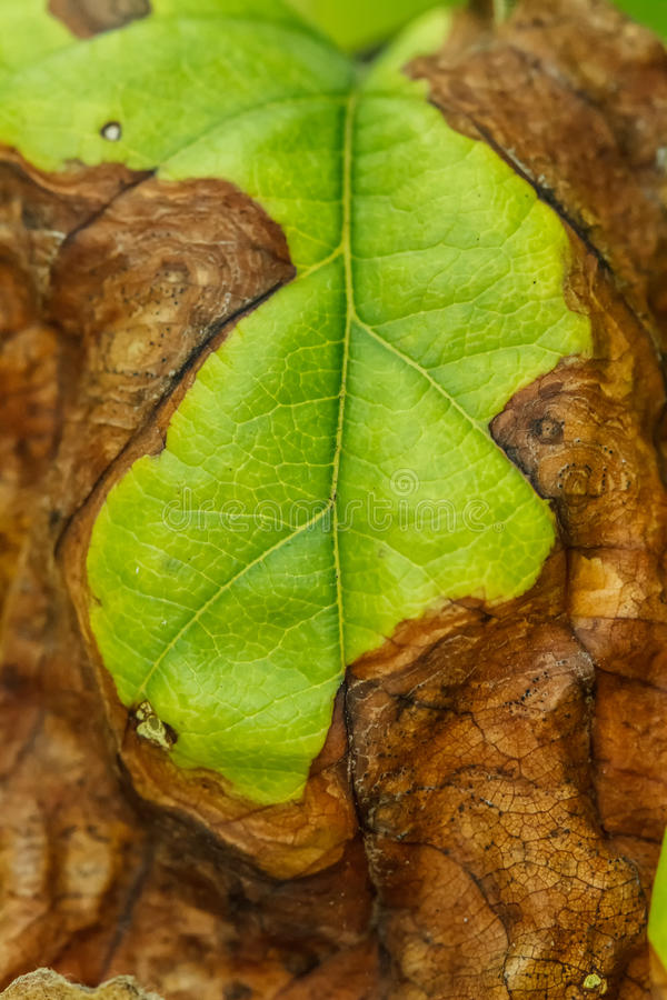 La maladie des arbres fruitiers image stock image du herbicides horticulture 42108073 - Maladie des arbres fruitiers ...