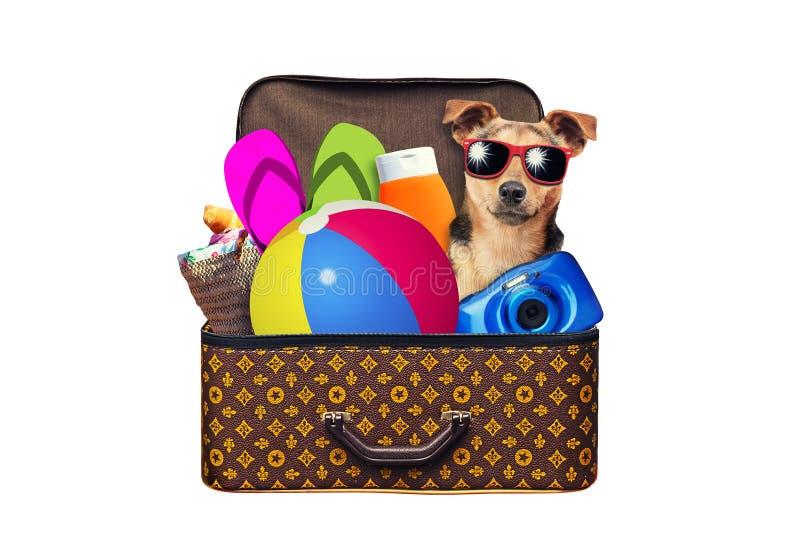 La maleta llena del vintage del pequeño perro llena de artículos por vacaciones de verano viaja, las vacaciones, viaje y viaje ai fotografía de archivo