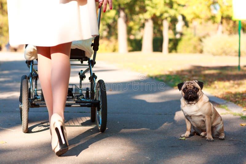 La mamá en sus talones está caminando con un niño cerca de un pequeño perro afuera imágenes de archivo libres de regalías