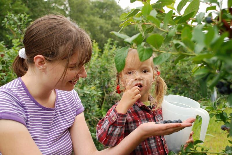 La maman et la fille dans le jardin rassemblent des myrtilles photo stock