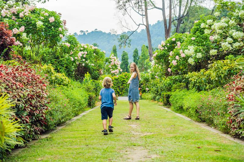 La maman et le fils courent autour dans le jardin de floraison Concept heureux de style de vie de famille images libres de droits