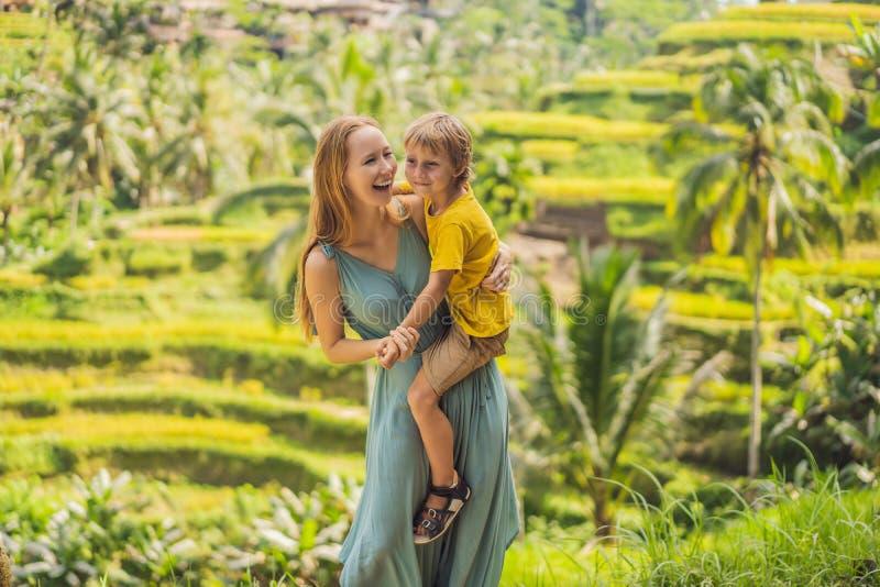 La mamma ed il figlio sul riso sistemano nei precedenti dei terrazzi del riso, Ubud, Bali, Indonesia Viaggiando con il concetto d fotografia stock libera da diritti