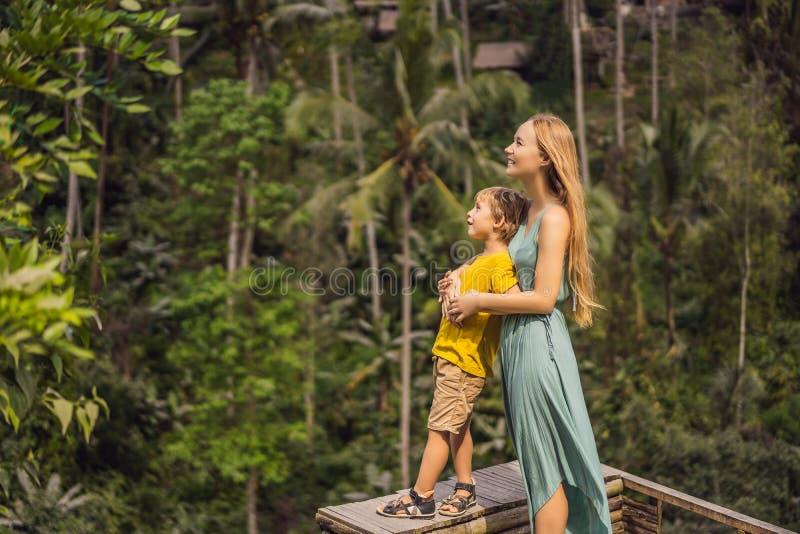 La mamma ed il figlio sul riso sistemano nei precedenti dei terrazzi del riso, Ubud, Bali, Indonesia Viaggiando con il concetto d fotografia stock