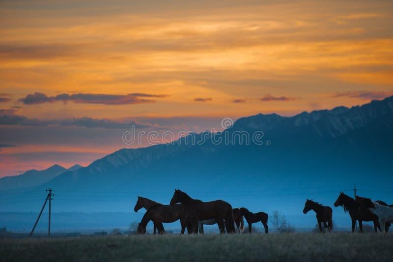 La manada hermosa del caballo de bahía pasta en las montañas en la puesta del sol, fondo natural soleado del inconformista asombr imagen de archivo