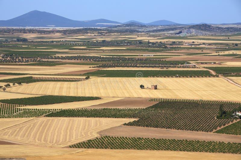 La Mancha Ackerland U. Weinberge - Spanien Lizenzfreie Stockfotografie