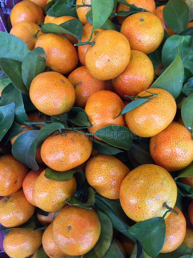 La mandarina, Citrus tangerina fotografía de archivo
