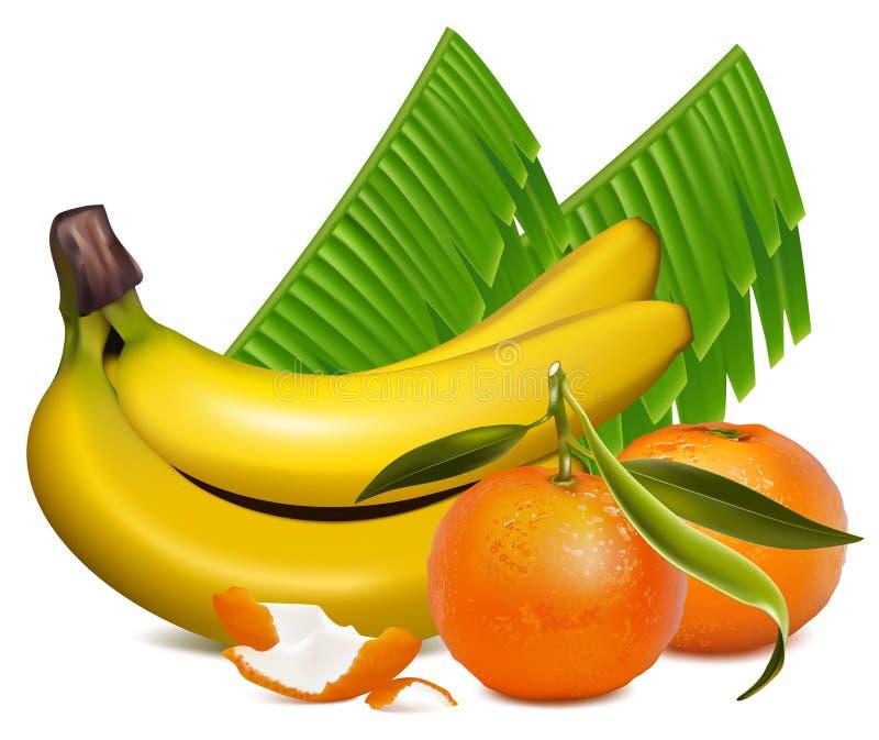 La mandarina fresca da fruto con las hojas y bana verdes stock de ilustración