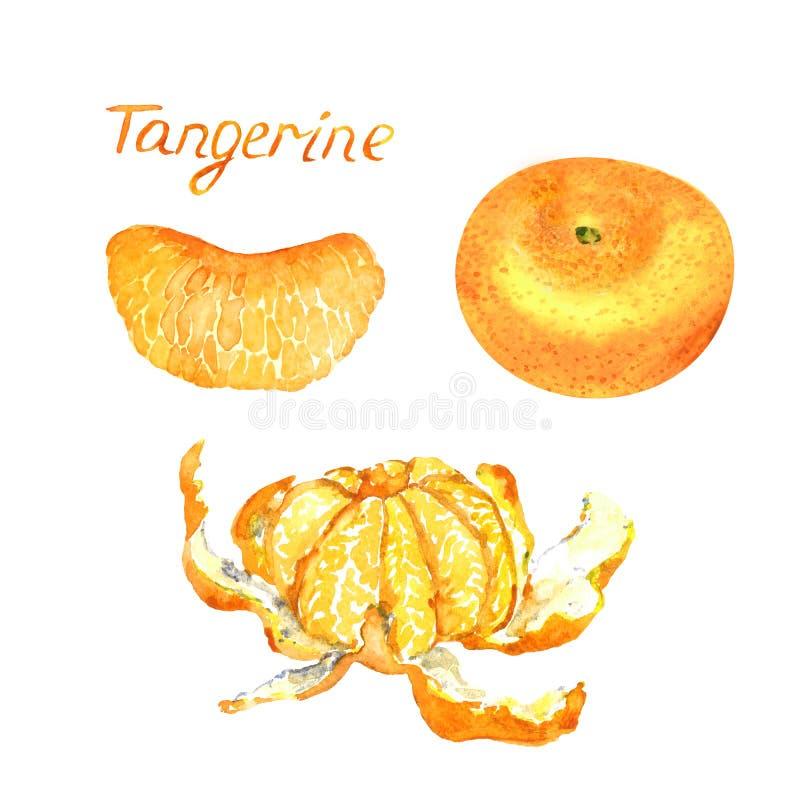 La mandarine porte des fruits tranche épluché, entière et de section illustration stock