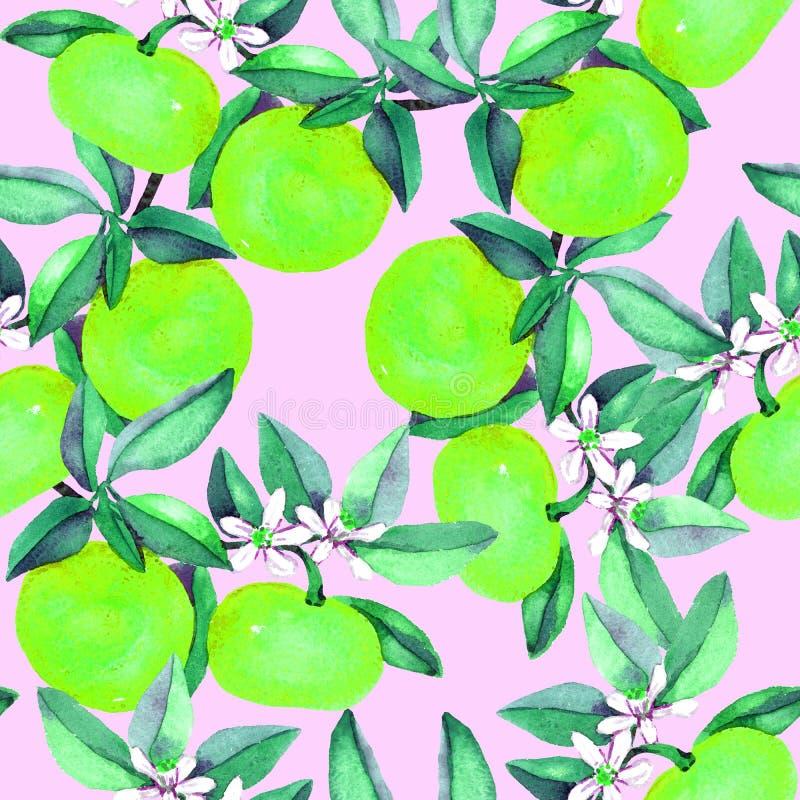 La mandarine s'embranche avec les fruits verts et les fleurs blanches sur le fond rose mou illustration libre de droits