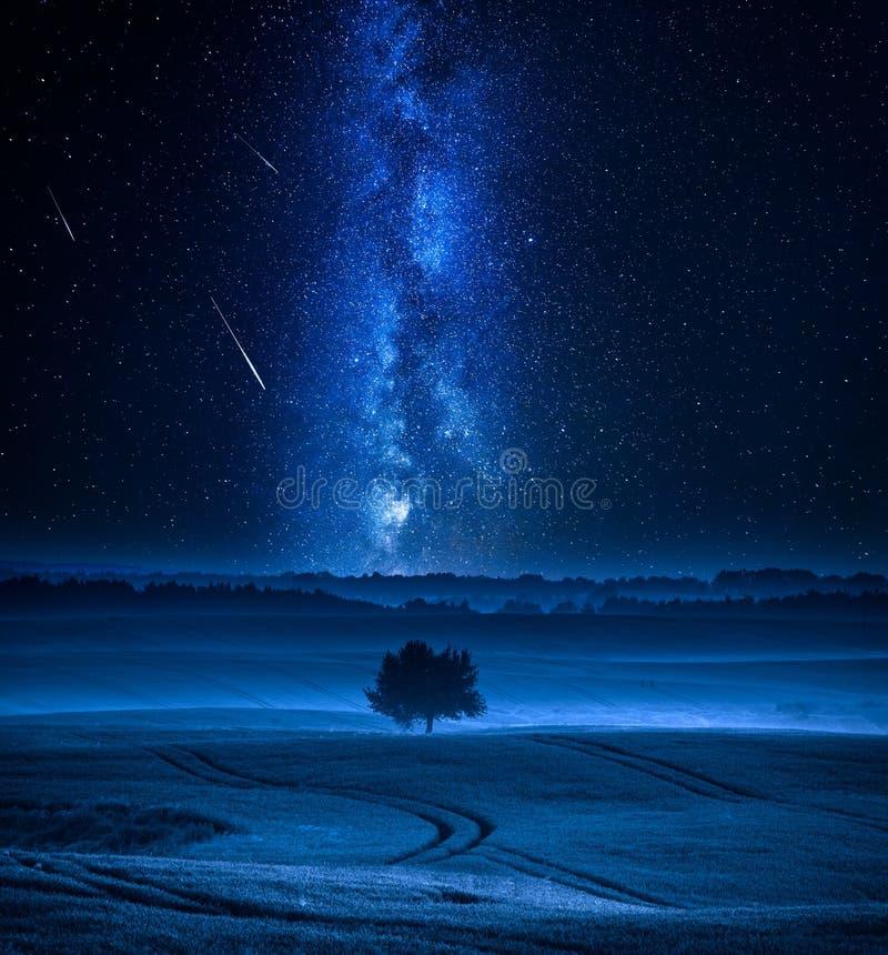 La manière laiteuse et les étoiles filantes plus d'ont classé avec un arbre photo stock
