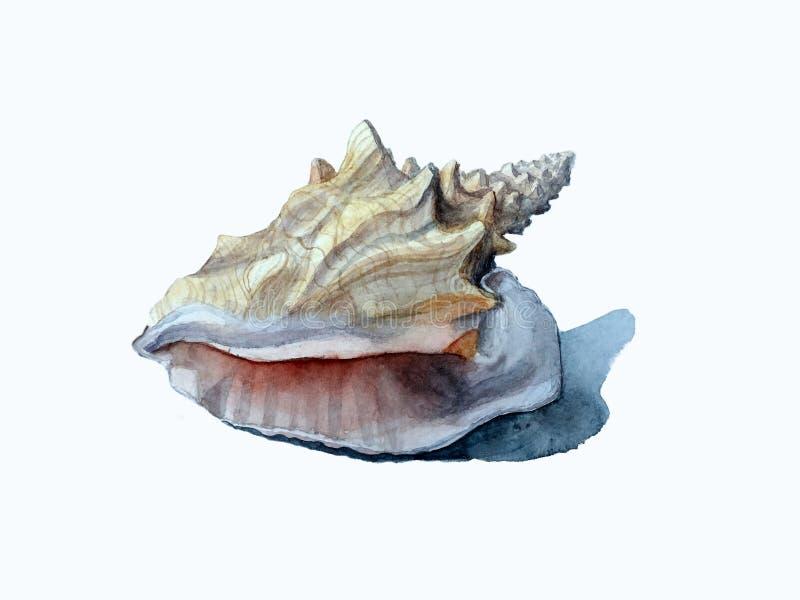 La mano ahoga la concha marina stock de ilustración