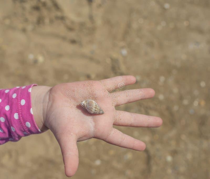 La mano con la c?scara en fondo de la arena la mano de los ni?os que lleva a cabo una c?scara en la palma foto de archivo libre de regalías