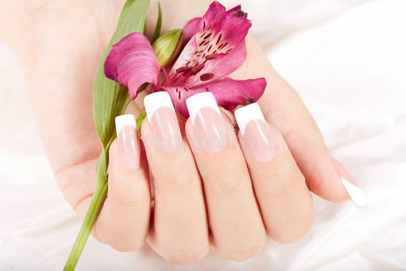 La mano con el francés artificial largo manicured clavos y la flor del lirio imagenes de archivo