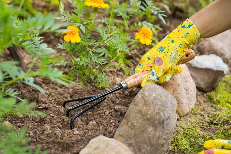 La mano con la zappa allenta la terra nella fine del letto di fiore su fotografia stock libera da diritti