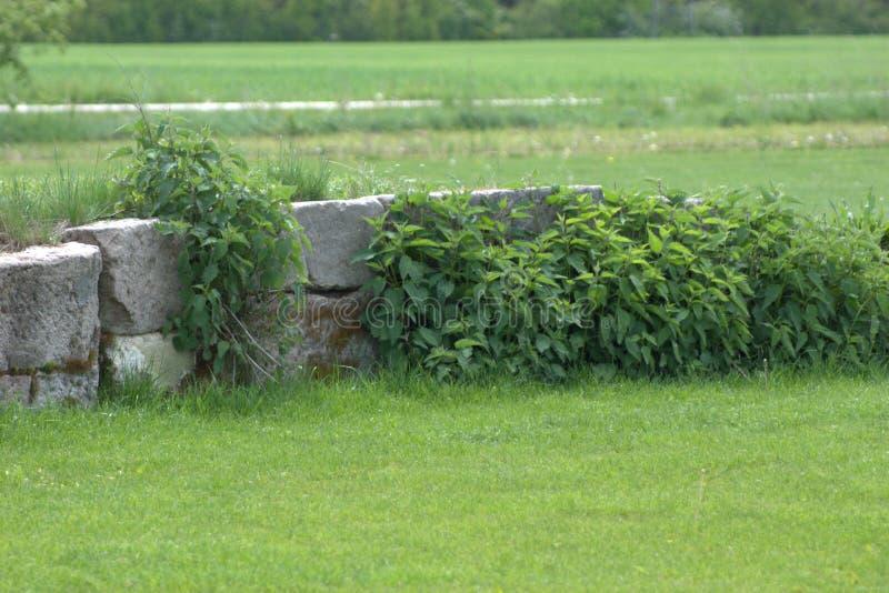 La mano corta cortó la pared de piedra que era vuelta a tomar lentamente por las plantas imagenes de archivo