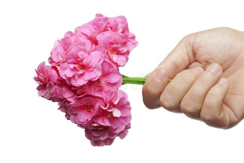 La mano dà un mazzo dei fiori nella figura del cuore immagine stock