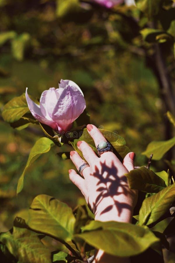 La mano de la hembra que alcanza a una flor rosada hermosa en un bosque fotos de archivo libres de regalías