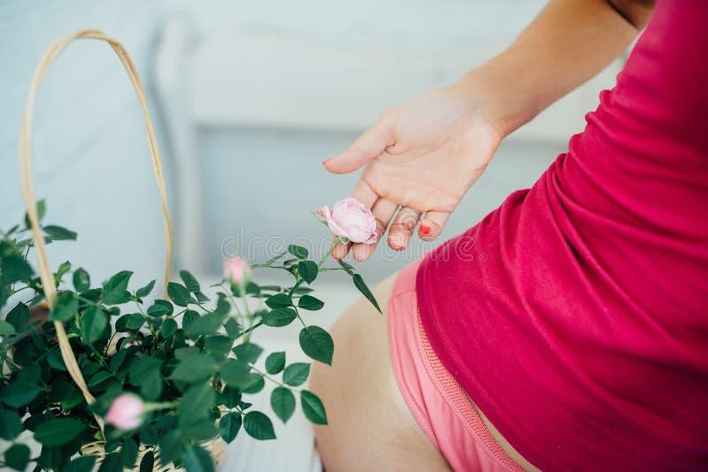 La mano de la mujer suavemente rosas de una flor foto de archivo