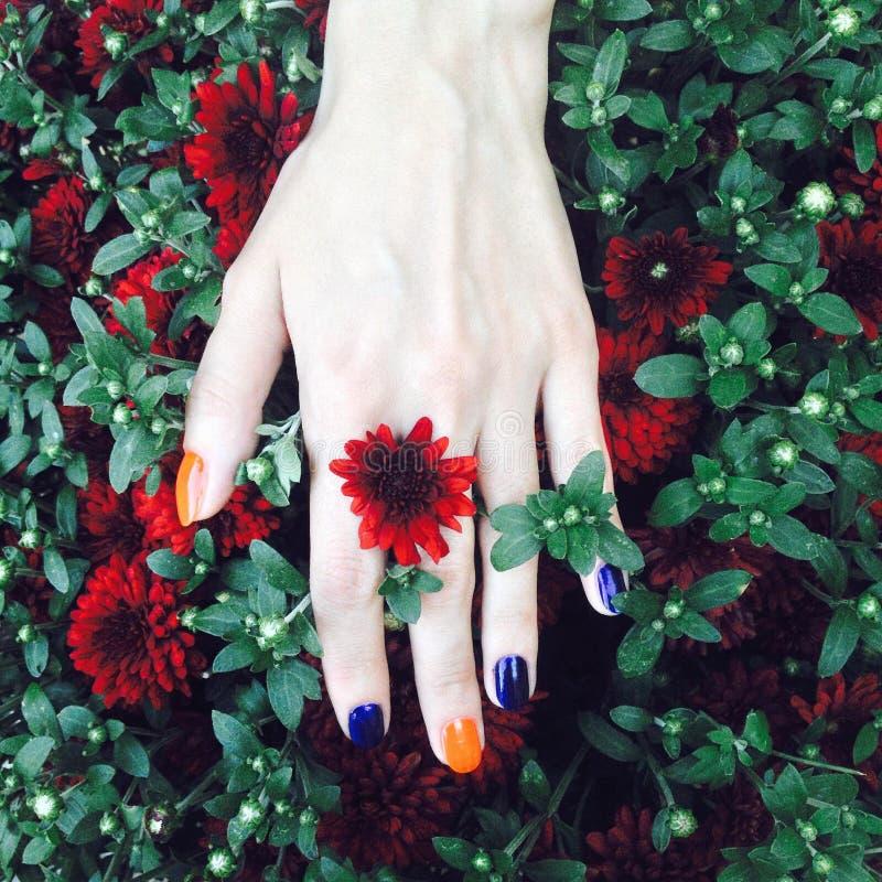 La mano de la mujer con la manicura brillante colorida en las flores frescas imagen de archivo libre de regalías