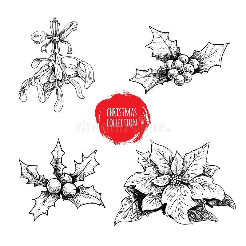 La mano de la Navidad dibujada planta la colección Bayas del acebo, poinsetia, muérdago Símbolos estacionales del invierno Decora stock de ilustración