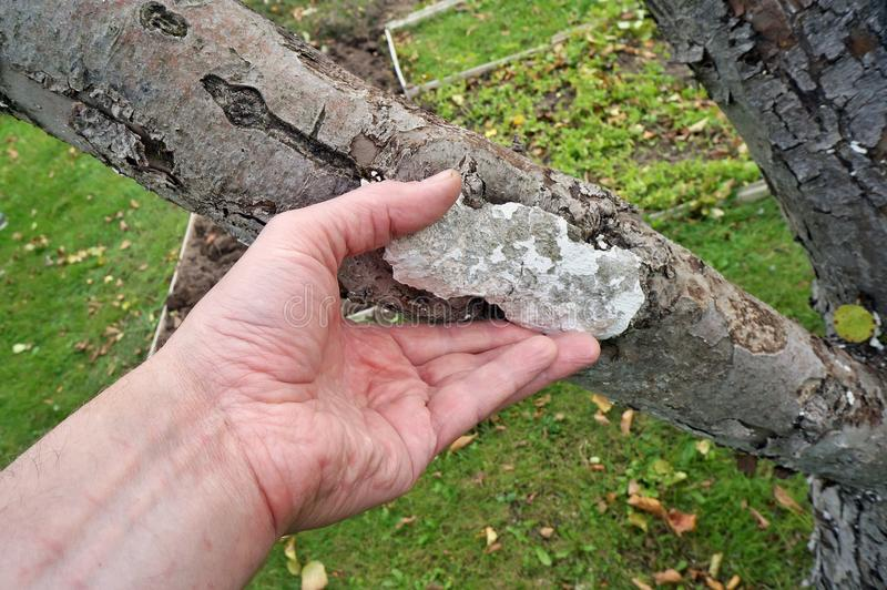 La mano de un granjero mayor del abuelo quita el remiendo del cemento imágenes de archivo libres de regalías