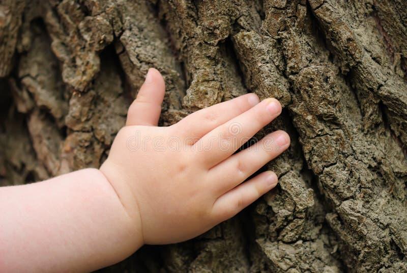 La mano dei bambini è posizionata su un vecchio ceppo fotografia stock libera da diritti