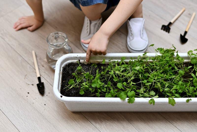 La mano dei punti del bambino al suolo nei vasi del giardino fotografia stock