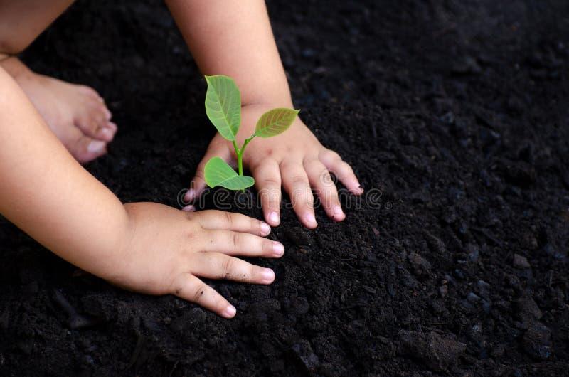 La mano del bebé del árbol joven del árbol en la tierra oscura, el concepto implantó conciencia del ` s de los niños en el ambien fotografía de archivo libre de regalías