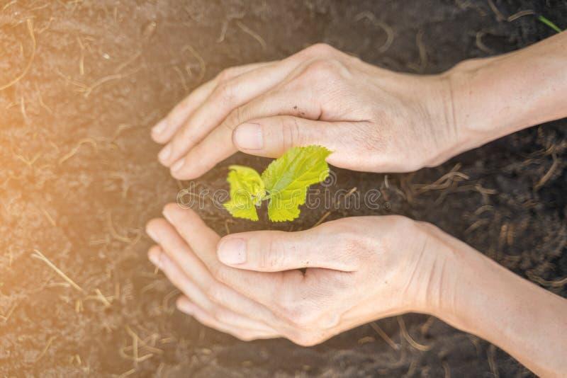 La mano del granjero que planta el árbol joven en suelo negro imagen de archivo libre de regalías