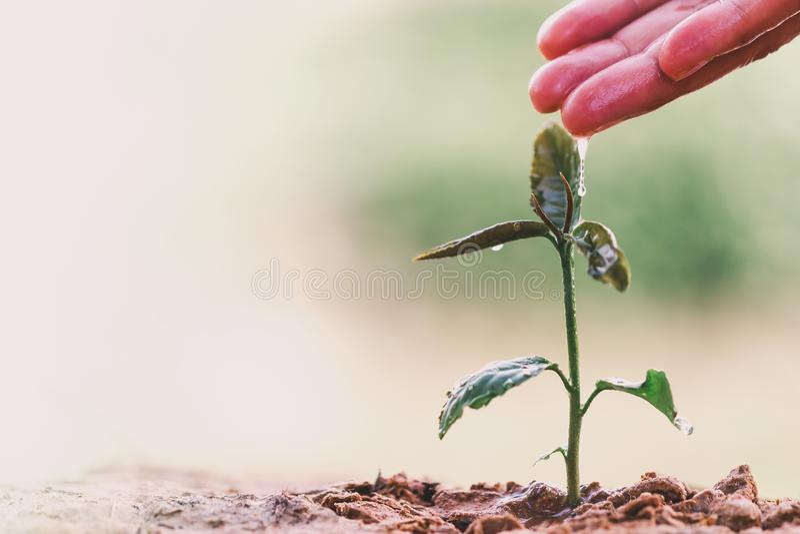 La mano del granjero que riega una plántula en la naturaleza verde del bokeh fotos de archivo