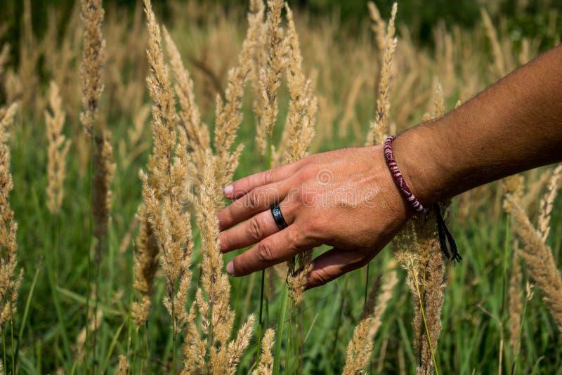 La mano del hombre que toca la hierba en un campo verde hermoso en un día de verano hermoso Tacto de las maravillas de la natural fotografía de archivo libre de regalías