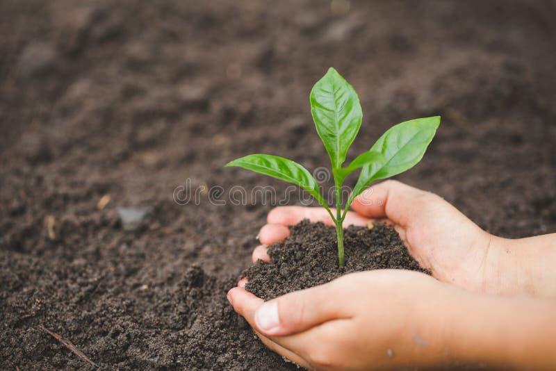 La mano del niño que sostiene un pequeño almácigo, planta un árbol, reduce el calentamiento del planeta, día del ambiente mundial foto de archivo