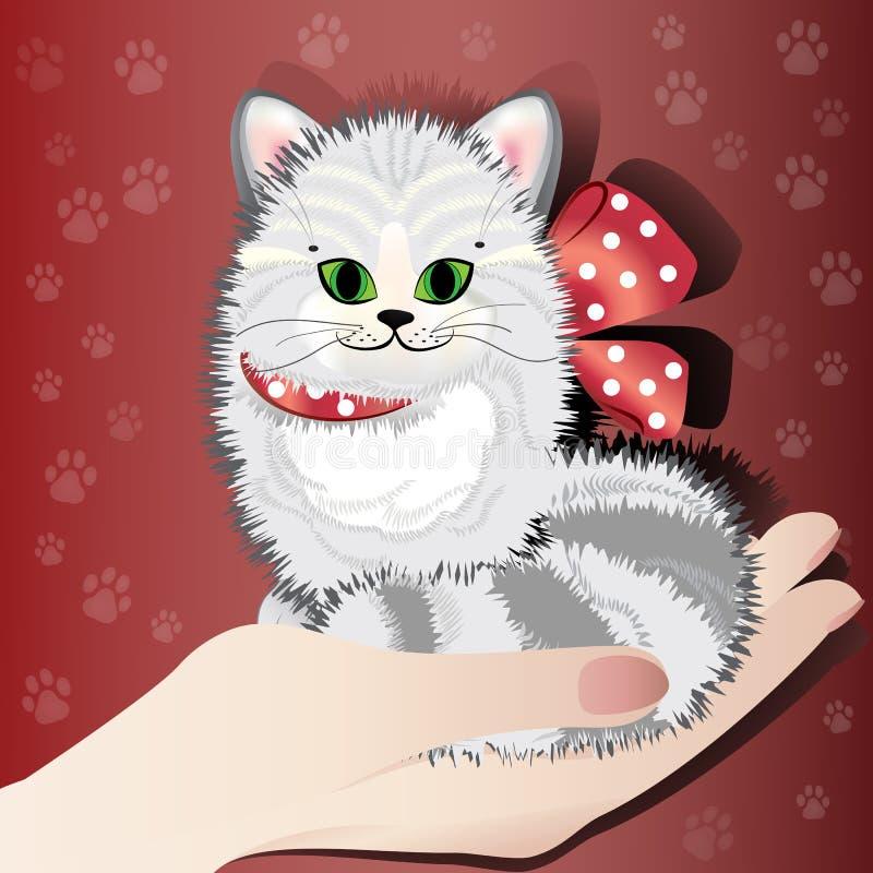 La mano del ` s de la señora sostiene un gatito lindo del gato atigrado imagen de archivo libre de regalías