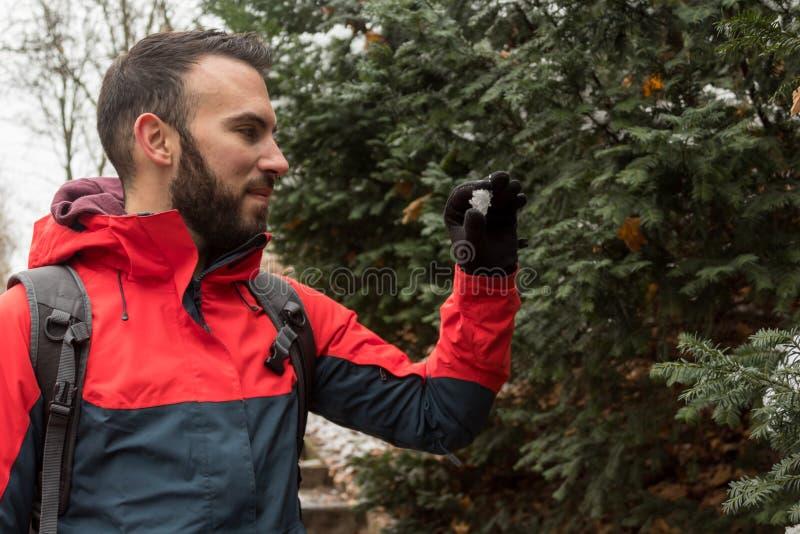 La mano del ` s dell'uomo tocca la neve nella foresta dell'inverno mentre trave fotografie stock