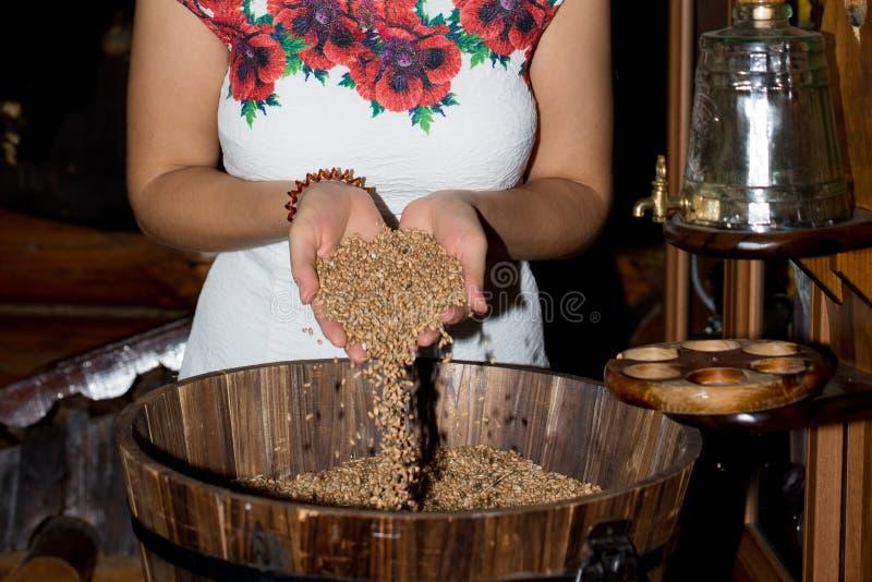 La mano del ` s della ragazza versa una manciata di grano del grano immagini stock